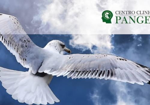 Psicologo Borgomanero: Centro Clinico Pangea